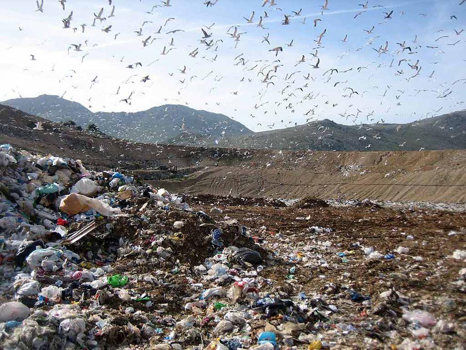 Valter Molinaro - La sostenibilità ambientale GRAZIE PER L'ATTENZIONE
