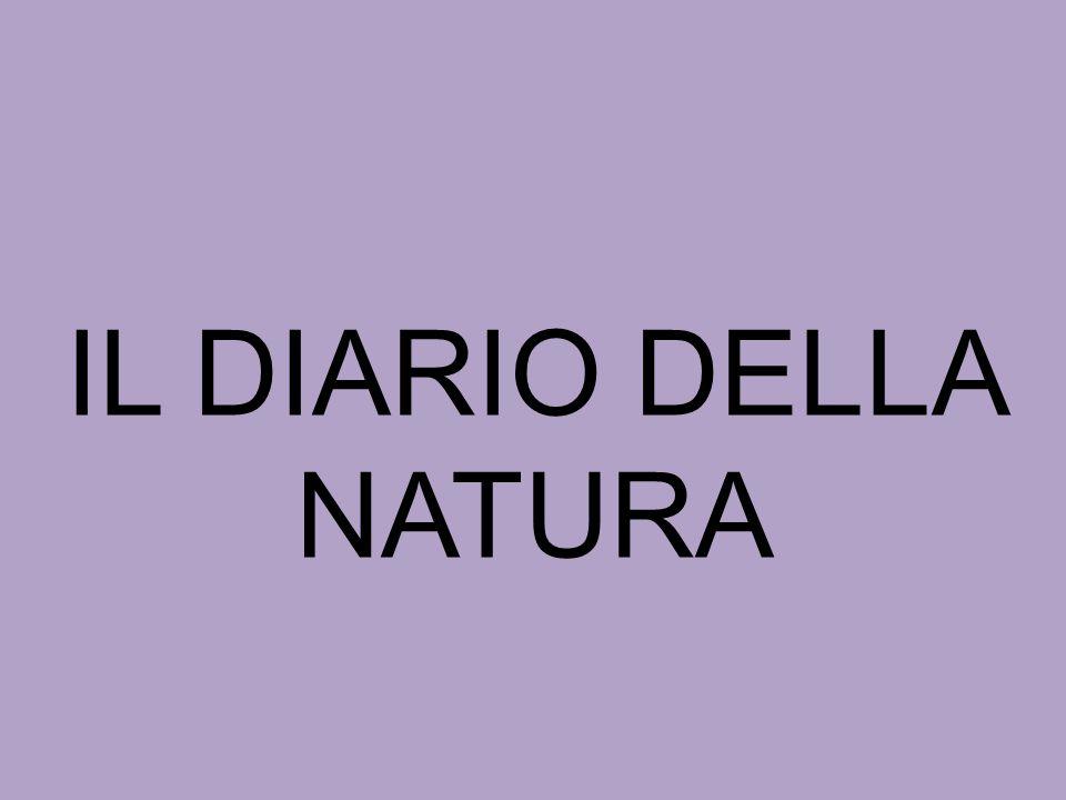 Scuola Diego Valeri