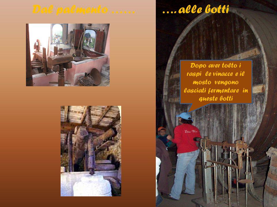 Dopo aver tolto i raspi le vinacce e il mosto vengono lasciati fermentare in queste botti Dal palmento …… ….
