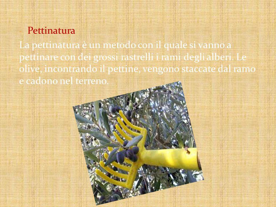 - Pettinatura La pettinatura è un metodo con il quale si vanno a pettinare con dei grossi rastrelli i rami degli alberi.