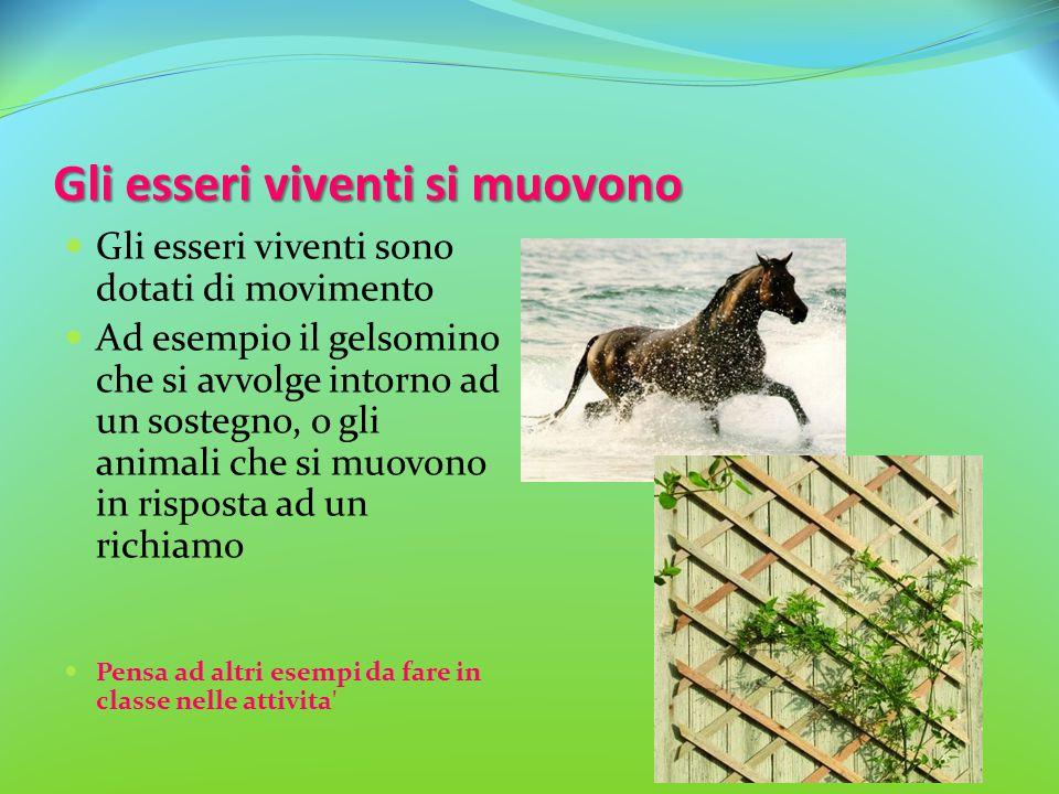 Gli esseri viventi si muovono Gli esseri viventi sono dotati di movimento Ad esempio il gelsomino che si avvolge intorno ad un sostegno, o gli animali