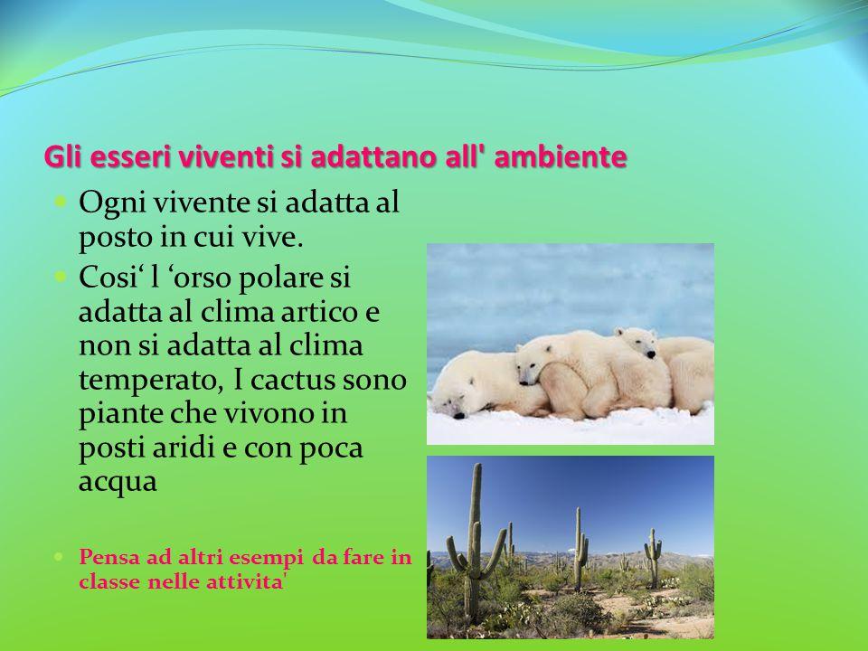 Gli esseri viventi si adattano all' ambiente Ogni vivente si adatta al posto in cui vive. Cosi' l 'orso polare si adatta al clima artico e non si adat
