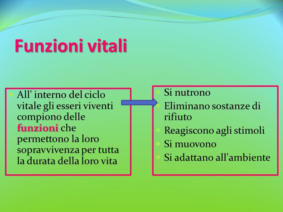 Funzioni vitali funzioni All' interno del ciclo vitale gli esseri viventi compiono delle funzioni che permettono la loro sopravvivenza per tutta la du