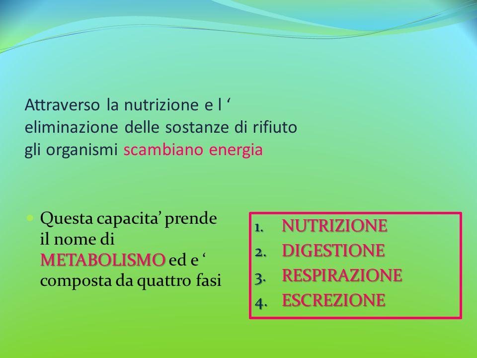 Attraverso la nutrizione e l ' eliminazione delle sostanze di rifiuto gli organismi scambiano energia METABOLISMO Questa capacita' prende il nome di M