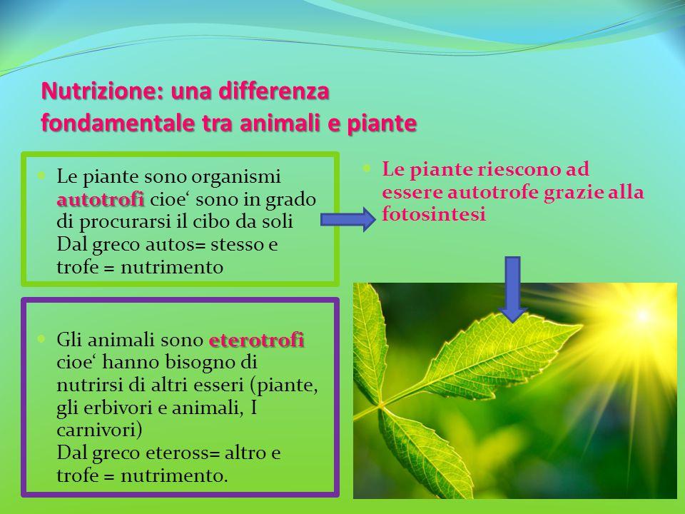 Nutrizione: una differenza fondamentale tra animali e piante autotrofi Le piante sono organismi autotrofi cioe' sono in grado di procurarsi il cibo da
