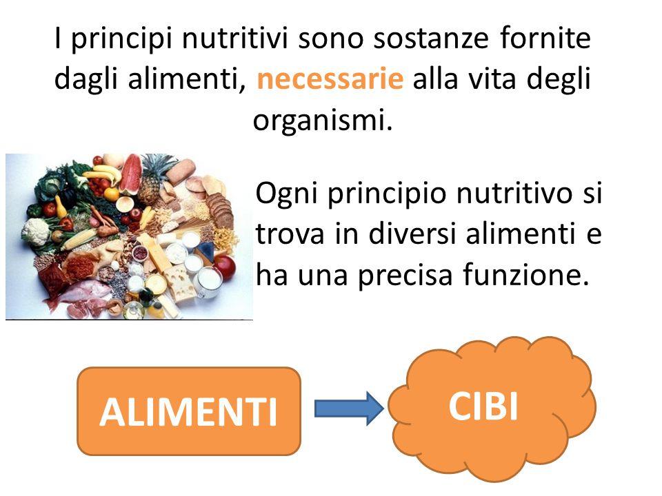 I principi nutritivi sono sostanze fornite dagli alimenti, necessarie alla vita degli organismi. CIBI ALIMENTI Ogni principio nutritivo si trova in di