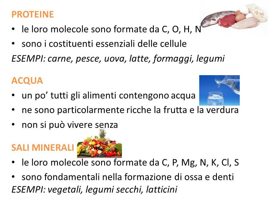 PROTEINE le loro molecole sono formate da C, O, H, N sono i costituenti essenziali delle cellule ESEMPI: carne, pesce, uova, latte, formaggi, legumi S