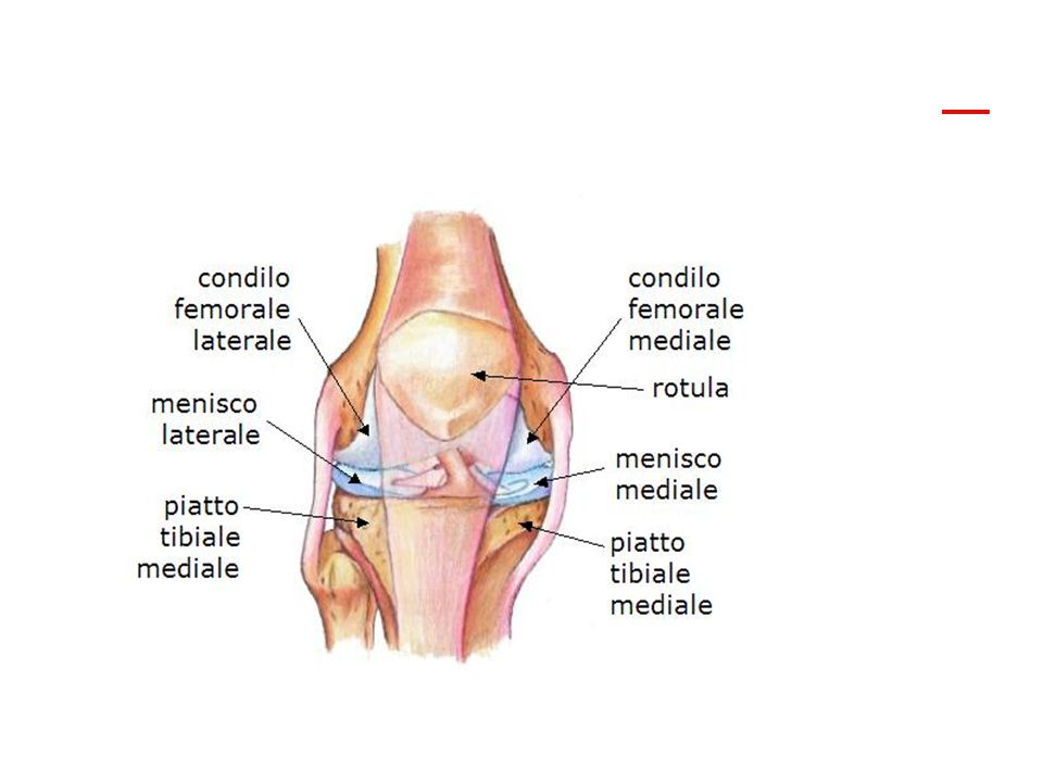 Artrosi Artrite reumatoide Artrite psoriasica Osteoporosi