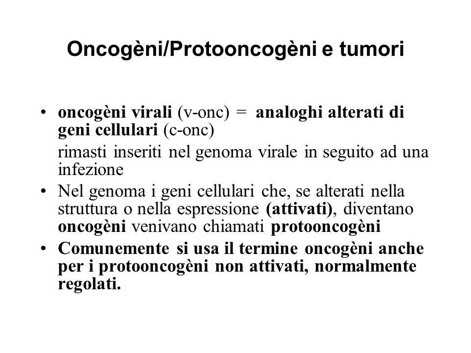 Oncogèni/Protooncogèni e tumori oncogèni virali (v-onc) = analoghi alterati di geni cellulari (c-onc) rimasti inseriti nel genoma virale in seguito ad