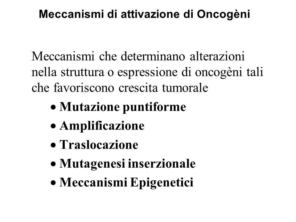Meccanismi di attivazione di Oncogèni Meccanismi che determinano alterazioni nella struttura o espressione di oncogèni tali che favoriscono crescita t