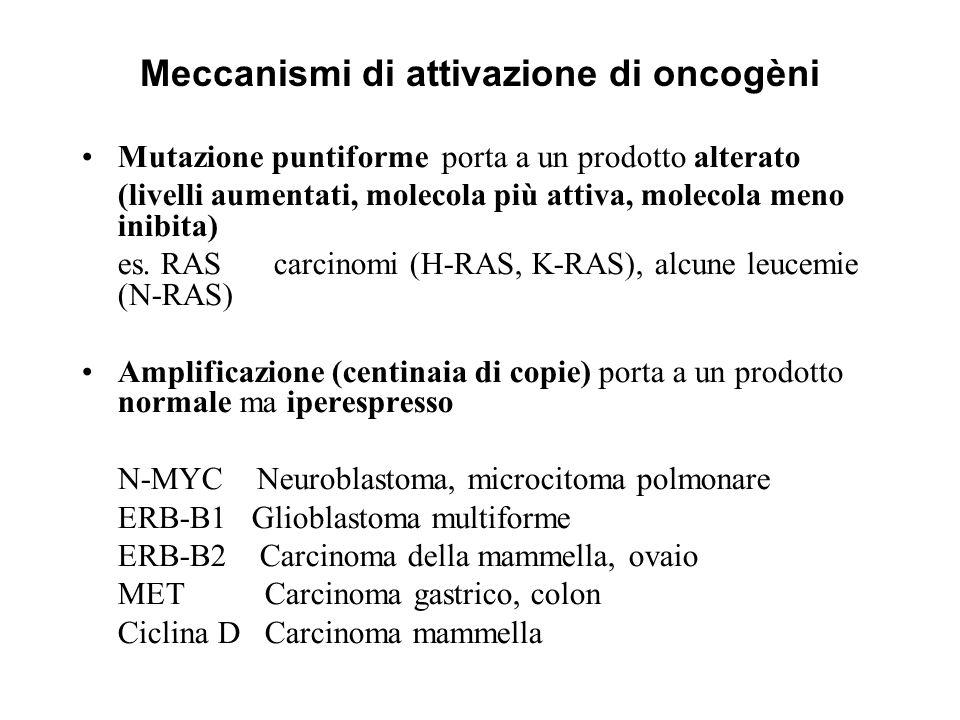 Meccanismi di attivazione di oncogèni Mutazione puntiforme porta a un prodotto alterato (livelli aumentati, molecola più attiva, molecola meno inibita