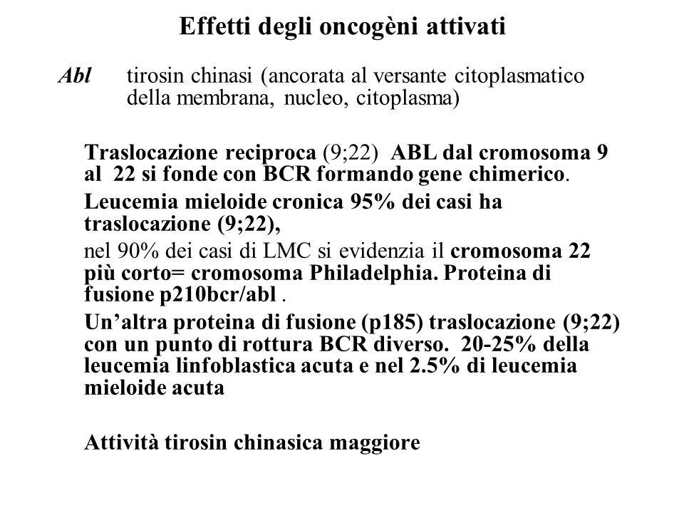 Effetti degli oncogèni attivati Abl tirosin chinasi (ancorata al versante citoplasmatico della membrana, nucleo, citoplasma) Traslocazione reciproca (