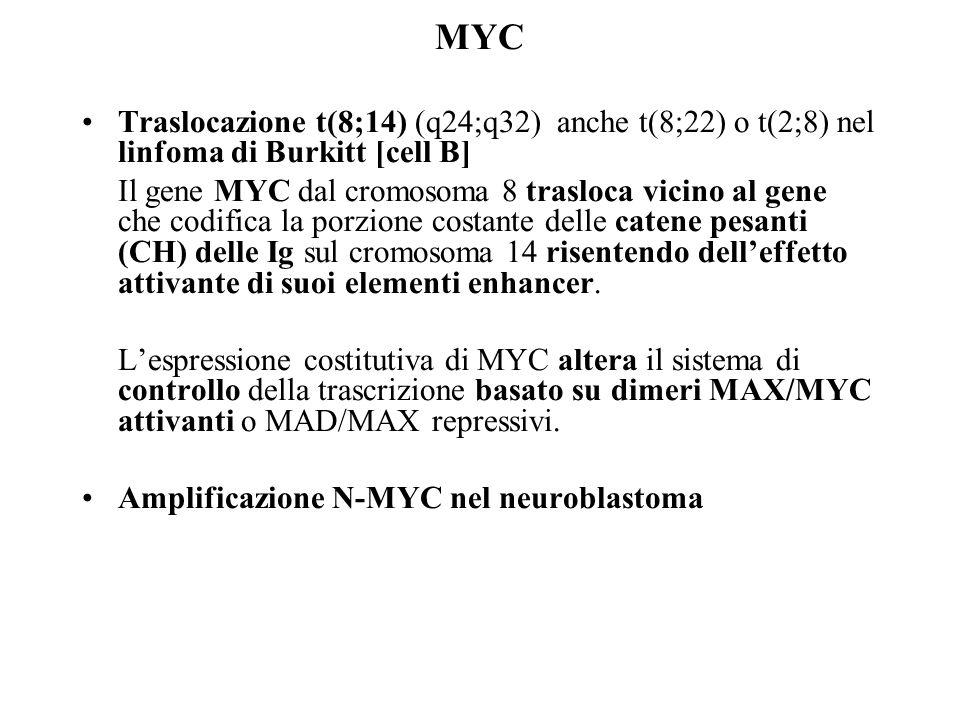 MYC Traslocazione t(8;14) (q24;q32) anche t(8;22) o t(2;8) nel linfoma di Burkitt [cell B] Il gene MYC dal cromosoma 8 trasloca vicino al gene che cod