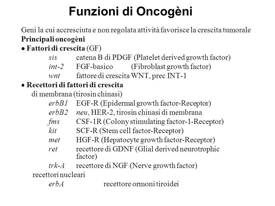 Funzioni di Oncogèni  Trasduttori del segnale srctirosin chinasi abltirosin chinasi rasGTP-asi (proteina G)  Fattori trascrizionali myc jun fos  Regolatori positivi del ciclo cellulare CCND ciclina D CCDK4chinasi ciclina-dipendente 4  Inibitori di apoptosi bcl-2