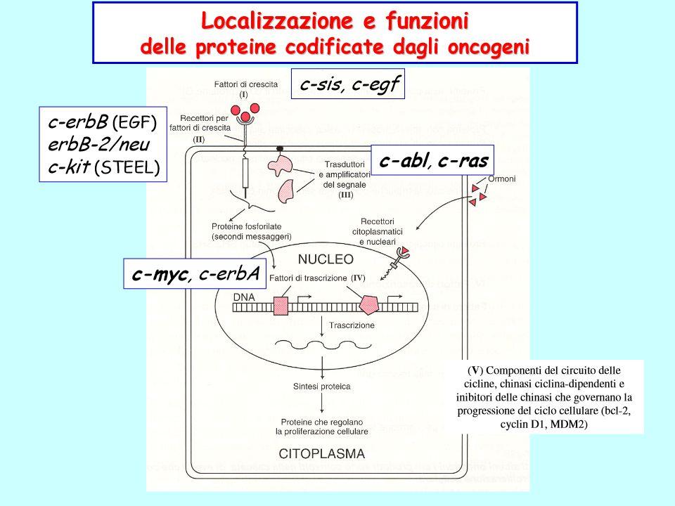 MYC Traslocazione t(8;14) (q24;q32) anche t(8;22) o t(2;8) nel linfoma di Burkitt [cell B] Il gene MYC dal cromosoma 8 trasloca vicino al gene che codifica la porzione costante delle catene pesanti (CH) delle Ig sul cromosoma 14 risentendo dell'effetto attivante di suoi elementi enhancer.