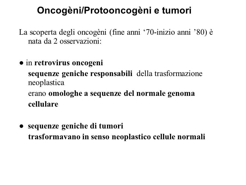 Oncogèni/Protooncogèni e tumori La scoperta degli oncogèni (fine anni '70-inizio anni '80) è nata da 2 osservazioni: ● in retrovirus oncogeni sequenze