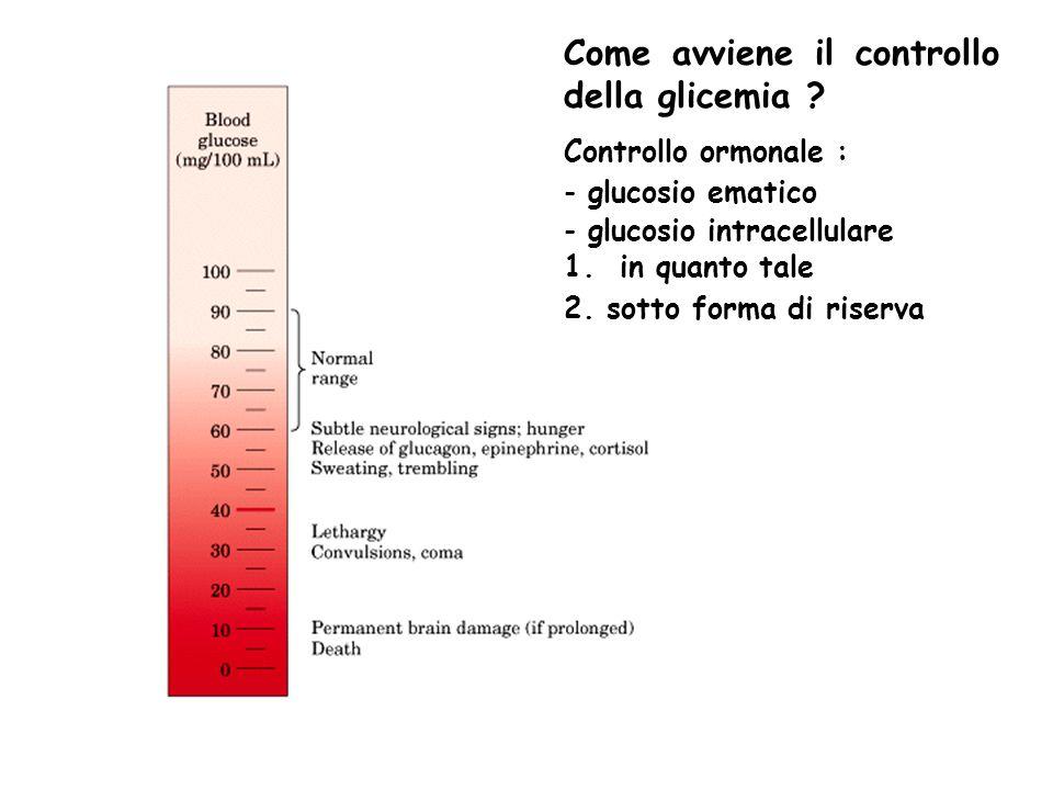 Come avviene il controllo della glicemia ? Controllo ormonale : - glucosio ematico - glucosio intracellulare 1. in quanto tale 2. sotto forma di riser
