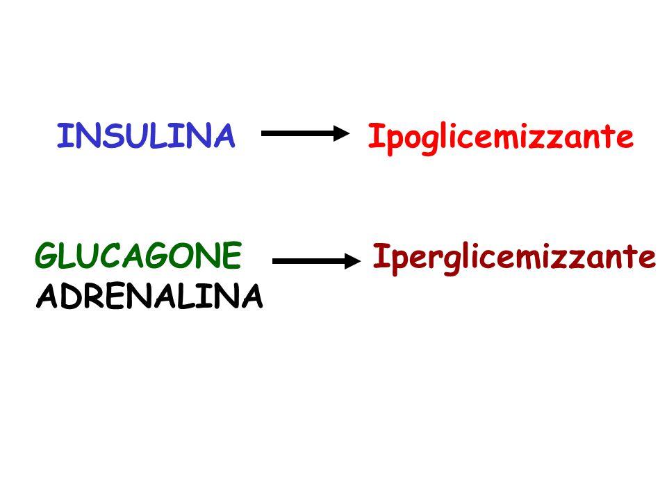 INSULINA Ipoglicemizzante GLUCAGONE Iperglicemizzante ADRENALINA