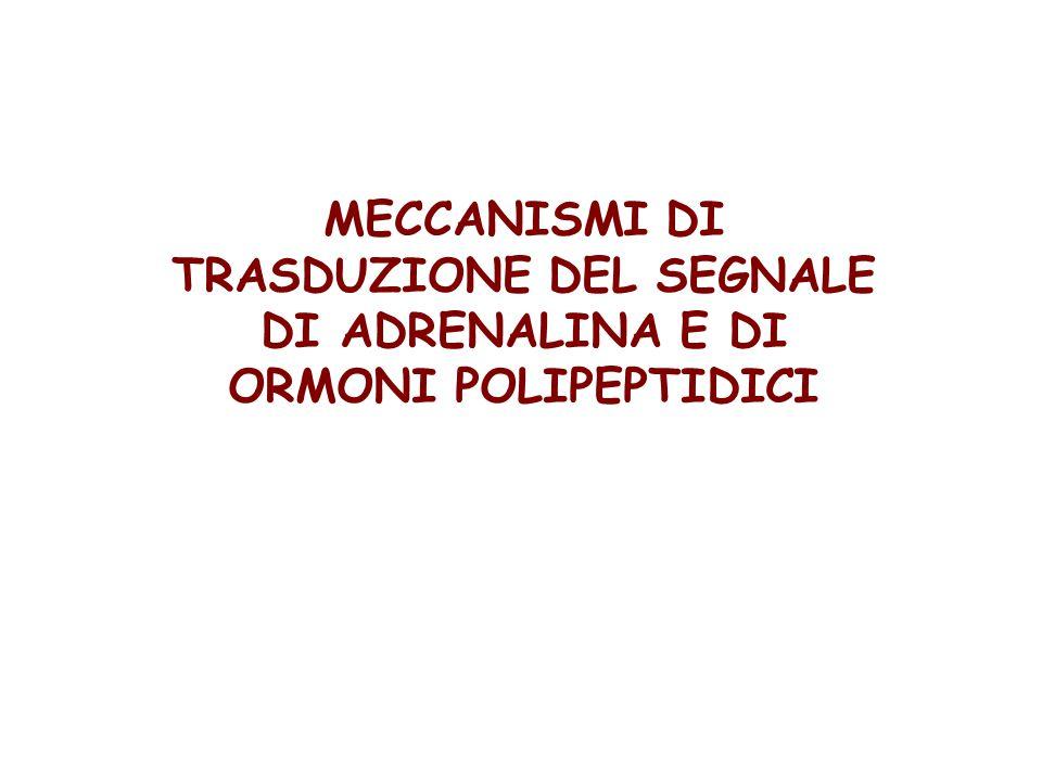 MECCANISMI DI TRASDUZIONE DEL SEGNALE DI ADRENALINA E DI ORMONI POLIPEPTIDICI