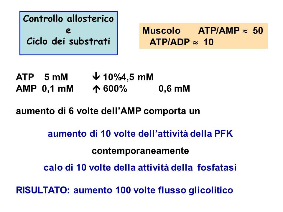 Muscolo ATP/AMP  50 ATP/ADP  10 Controllo allosterico e Ciclo dei substrati ATP 5 mM  10%4,5 mM AMP 0,1 mM  600% 0,6 mM aumento di 6 volte dell'AM