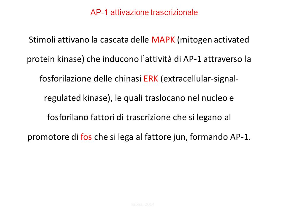 Stimoli attivano la cascata delle MAPK (mitogen activated protein kinase) che inducono l'attività di AP-1 attraverso la fosforilazione delle chinasi ERK (extracellular-signal- regulated kinase), le quali traslocano nel nucleo e fosforilano fattori di trascrizione che si legano al promotore di fos che si lega al fattore jun, formando AP-1.