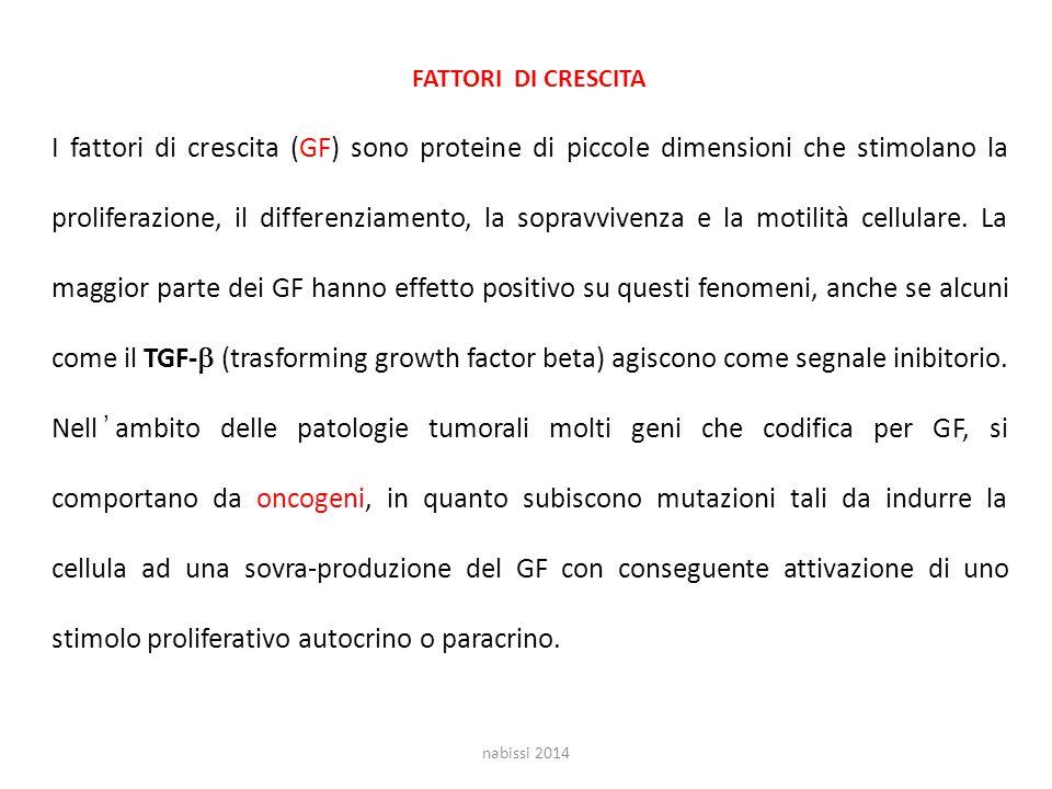 FATTORI DI CRESCITA I fattori di crescita (GF) sono proteine di piccole dimensioni che stimolano la proliferazione, il differenziamento, la sopravvivenza e la motilità cellulare.