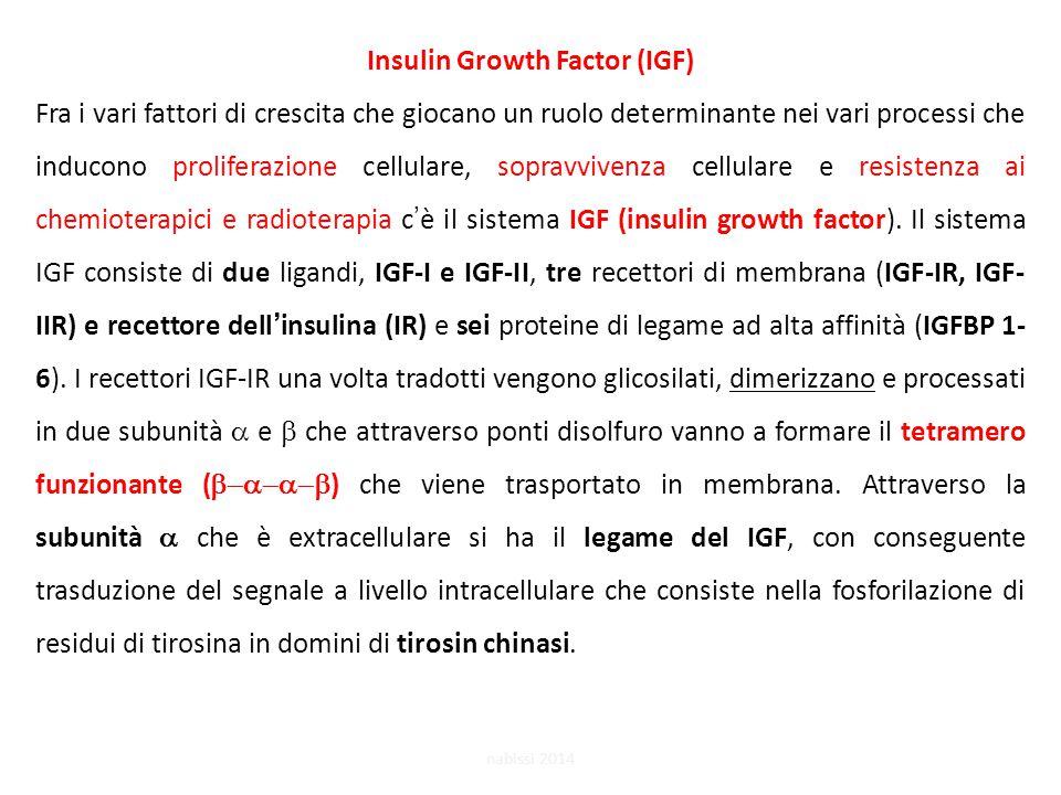 Insulin Growth Factor (IGF) Fra i vari fattori di crescita che giocano un ruolo determinante nei vari processi che inducono proliferazione cellulare, sopravvivenza cellulare e resistenza ai chemioterapici e radioterapia c'è il sistema IGF (insulin growth factor).