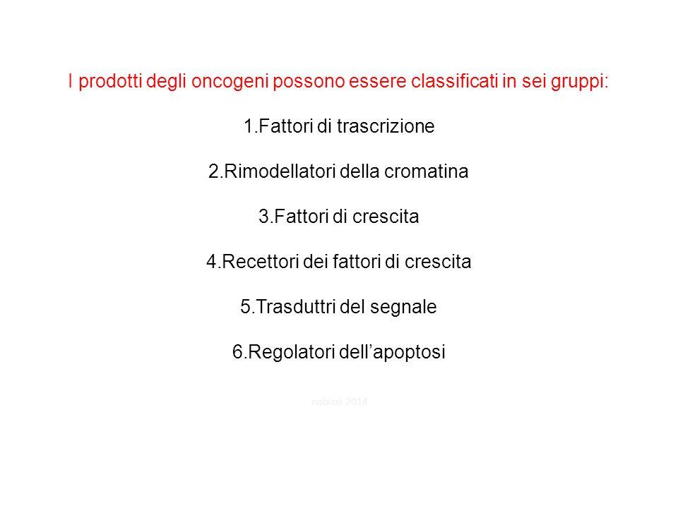 I prodotti degli oncogeni possono essere classificati in sei gruppi: 1.Fattori di trascrizione 2.Rimodellatori della cromatina 3.Fattori di crescita 4.Recettori dei fattori di crescita 5.Trasduttri del segnale 6.Regolatori dell'apoptosi nabissi 2014