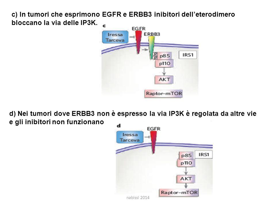 c) In tumori che esprimono EGFR e ERBB3 inibitori dell'eterodimero bloccano la via delle IP3K.