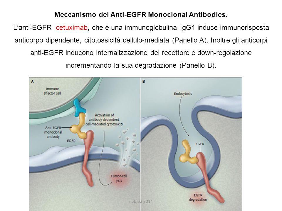 Meccanismo dei Anti-EGFR Monoclonal Antibodies.