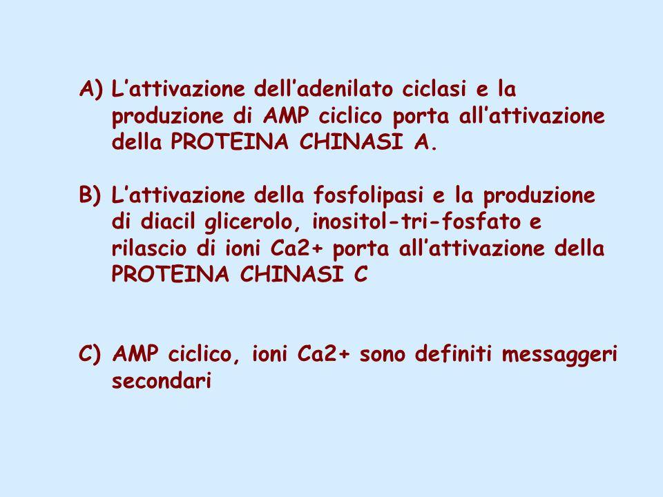 A)L'attivazione dell'adenilato ciclasi e la produzione di AMP ciclico porta all'attivazione della PROTEINA CHINASI A.
