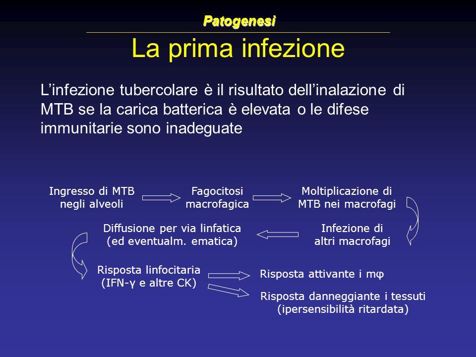 La prima infezione Patogenesi L'infezione tubercolare è il risultato dell'inalazione di MTB se la carica batterica è elevata o le difese immunitarie s