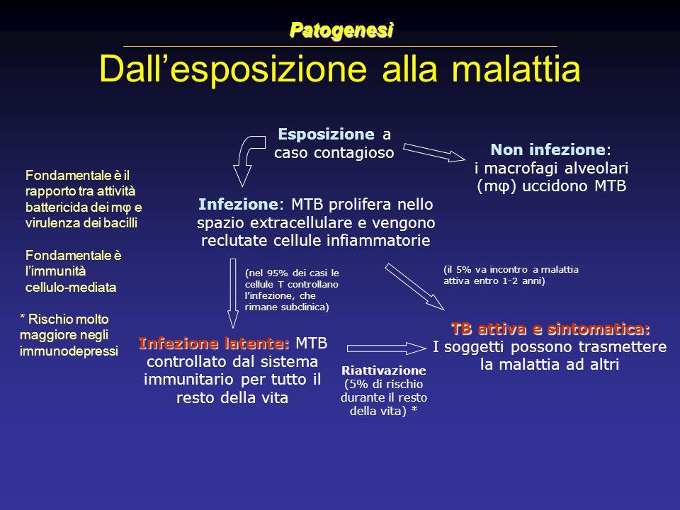 Dall'esposizione alla malattia Esposizione a caso contagioso Infezione: MTB prolifera nello spazio extracellulare e vengono reclutate cellule infiamma