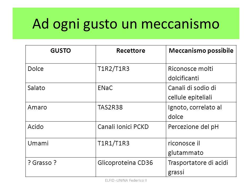 Ad ogni gusto un meccanismo ELFID -UNINA Federico II GUSTORecettoreMeccanismo possibile DolceT1R2/T1R3 Riconosce molti dolcificanti SalatoENaC Canali