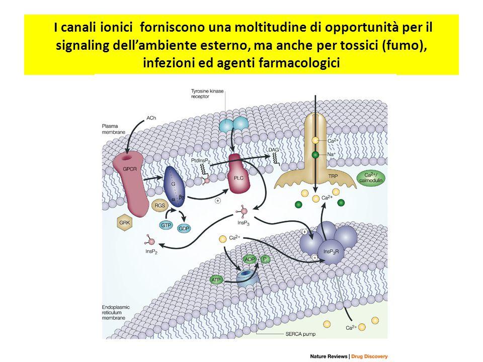 I canali ionici forniscono una moltitudine di opportunità per il signaling dell'ambiente esterno, ma anche per tossici (fumo), infezioni ed agenti far