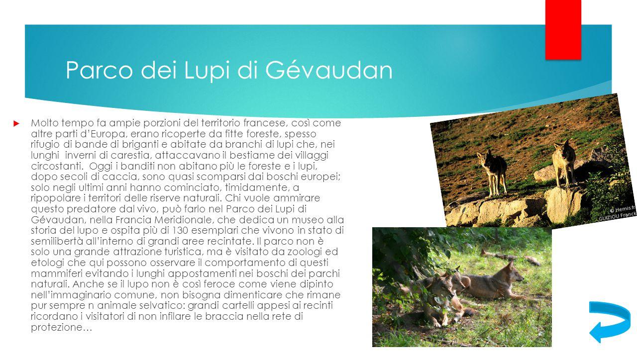 Parco dei Lupi di Gévaudan  Molto tempo fa ampie porzioni del territorio francese, così come altre parti d'Europa, erano ricoperte da fitte foreste,