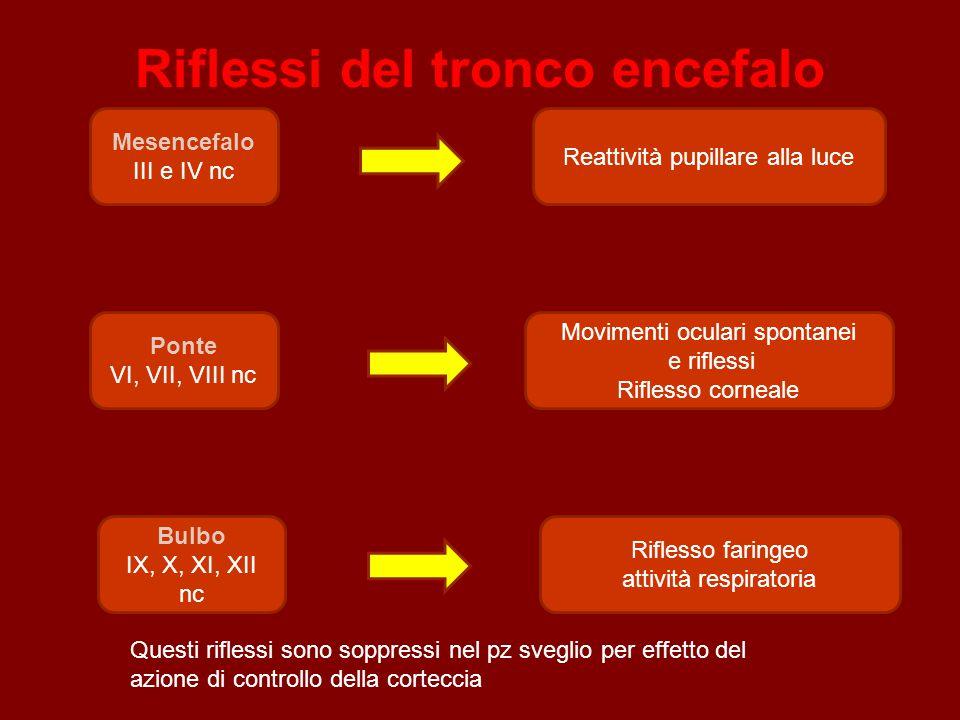 Riflessi del tronco encefalo Mesencefalo III e IV nc Ponte VI, VII, VIII nc Reattività pupillare alla luce Movimenti oculari spontanei e riflessi Rifl