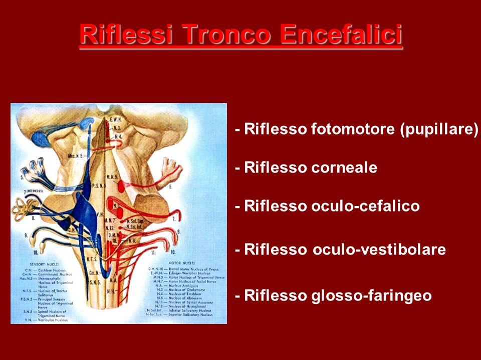 Riflessi Tronco Encefalici - Riflesso fotomotore (pupillare) - Riflesso corneale - Riflesso oculo-cefalico - Riflesso oculo-vestibolare - Riflesso glo