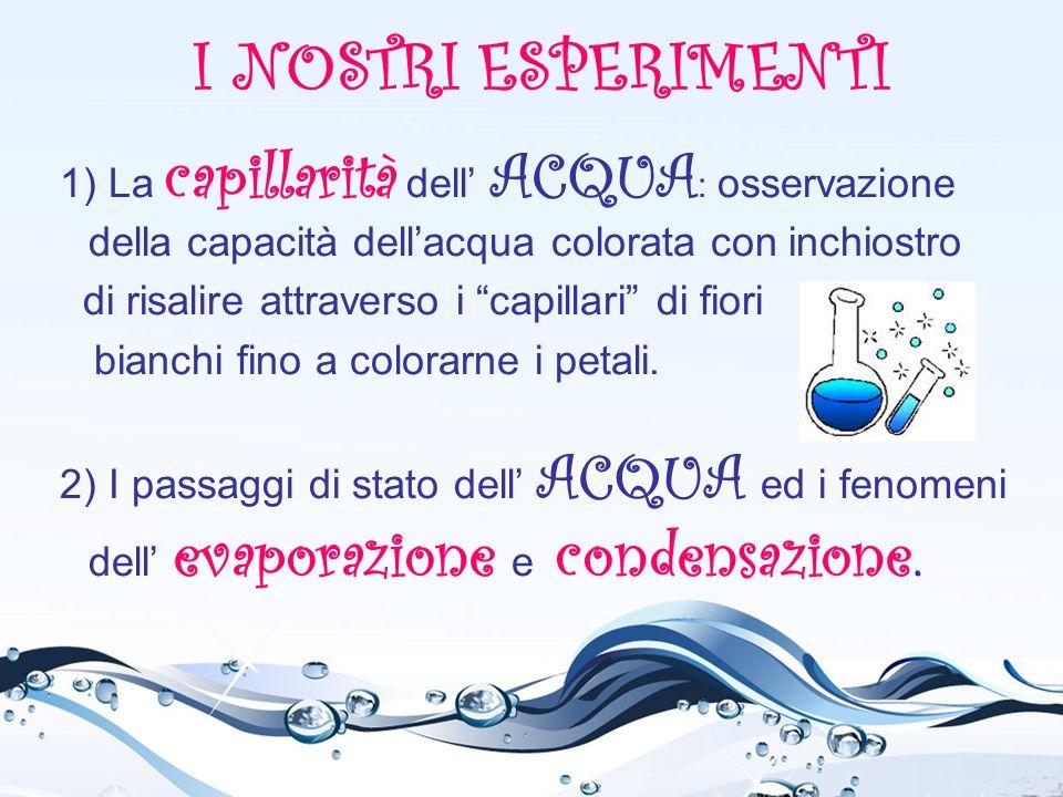 """I NOSTRI ESPERIMENTI 1) La capillarità dell' ACQUA : osservazione della capacità dell'acqua colorata con inchiostro di risalire attraverso i """"capillar"""