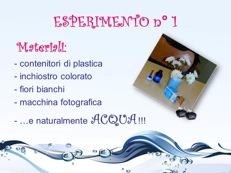 ESPERIMENTO n° 1 Materiali: - contenitori di plastica - inchiostro colorato - fiori bianchi - macchina fotografica - …e naturalmente ACQUA !!!