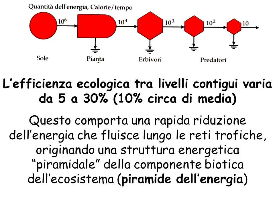 L'efficienza ecologica tra livelli contigui varia da 5 a 30% (10% circa di media) Questo comporta una rapida riduzione dell'energia che fluisce lungo