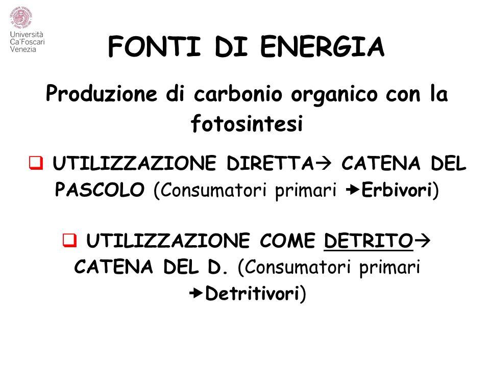 FONTI DI ENERGIA Produzione di carbonio organico con la fotosintesi  UTILIZZAZIONE DIRETTA  CATENA DEL PASCOLO (Consumatori primari  Erbivori)  UT