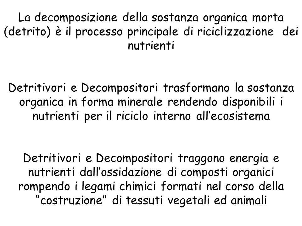 La decomposizione della sostanza organica morta (detrito) è il processo principale di riciclizzazione dei nutrienti Detritivori e Decompositori trasfo