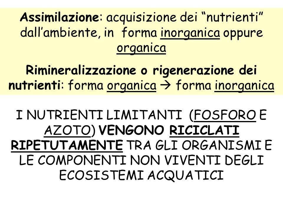 """Assimilazione: acquisizione dei """"nutrienti"""" dall'ambiente, in forma inorganica oppure organica Rimineralizzazione o rigenerazione dei nutrienti: forma"""