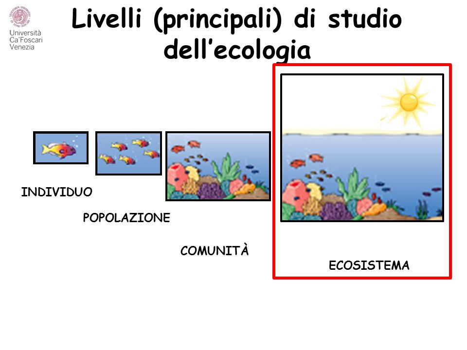 Ecosistema … Un'unità esplicita, dal punto di vista spaziale, della Terra che include, entro i suoi confini, tutti gli organismi insieme con tutte le componenti dell'ambiente abiotico. (LIKENS, 1992) Ecosistema  insieme di componenti in relazione tra di loro che costituiscono un'unità