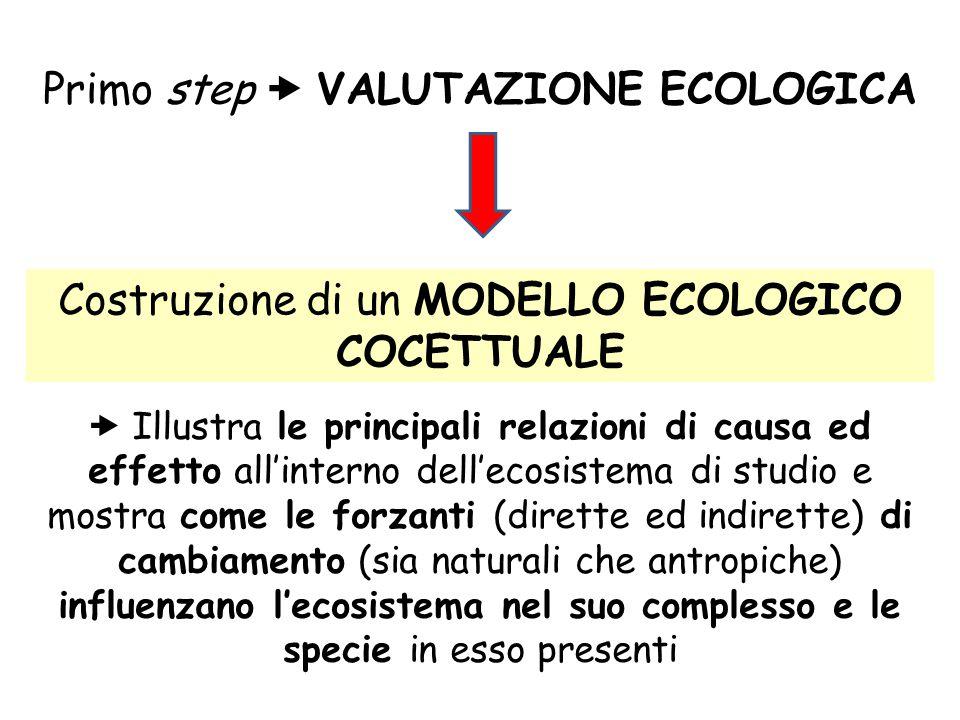 Primo step  VALUTAZIONE ECOLOGICA Costruzione di un MODELLO ECOLOGICO COCETTUALE  Illustra le principali relazioni di causa ed effetto all'interno d