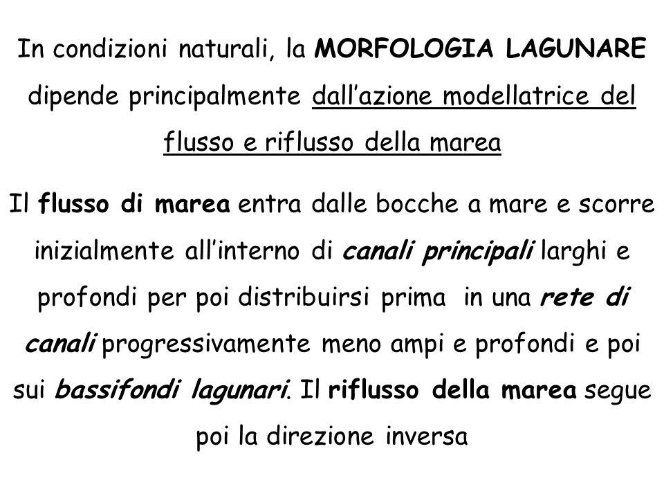 In condizioni naturali, la MORFOLOGIA LAGUNARE dipende principalmente dall'azione modellatrice del flusso e riflusso della marea Il flusso di marea en