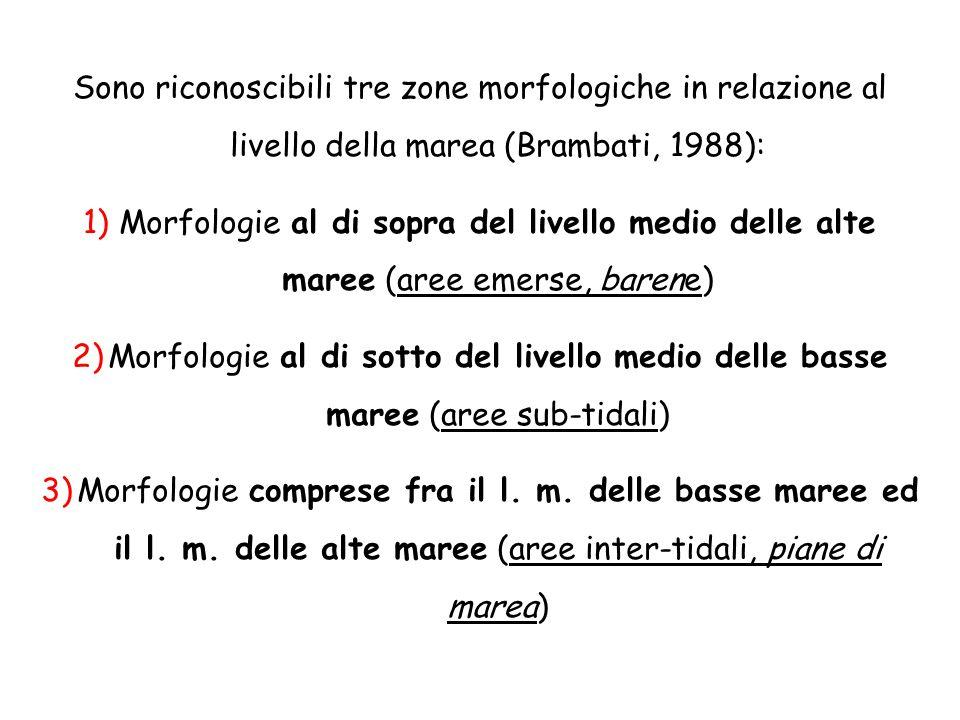 Sono riconoscibili tre zone morfologiche in relazione al livello della marea (Brambati, 1988): 1)Morfologie al di sopra del livello medio delle alte m