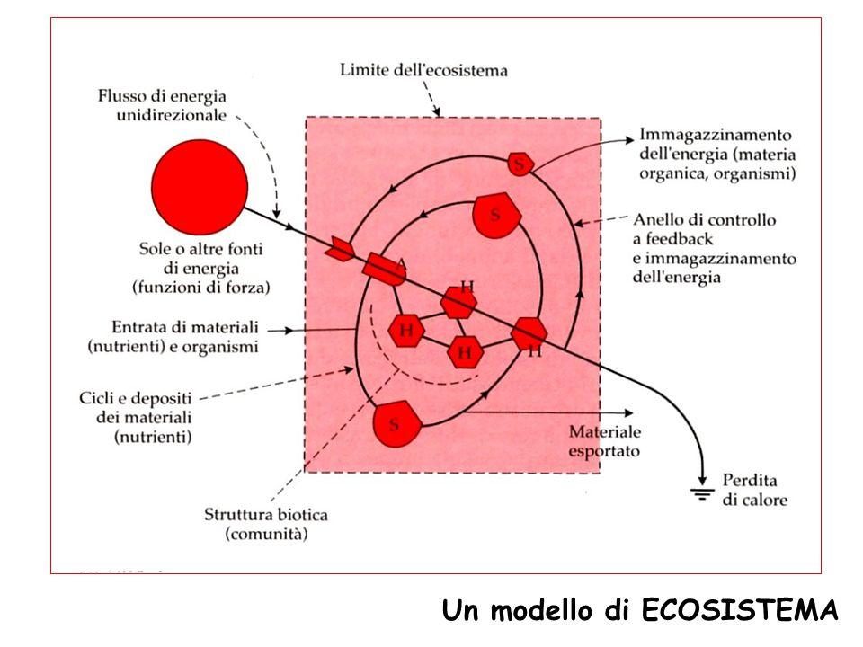 Organismi AUTOTROFI  sono in grado di trasformare il carbonio della CO 2 in molecole organiche e biomassa vivente Gli autotrofi di gran lunga dominanti sono i FOTOAUTOTROFI  utilizzano l'energia solare per convertire la CO 2 in composti organici semplici (FOTOSINTESI) Organismi ETEROTROFI  ottengono energia dalla demolizione delle sostanze organiche sintetizzate dagli autotrofi (o da altri organismi eterotrofi); questa energia è poi utilizzata per la sintesi di molecole organiche complesse