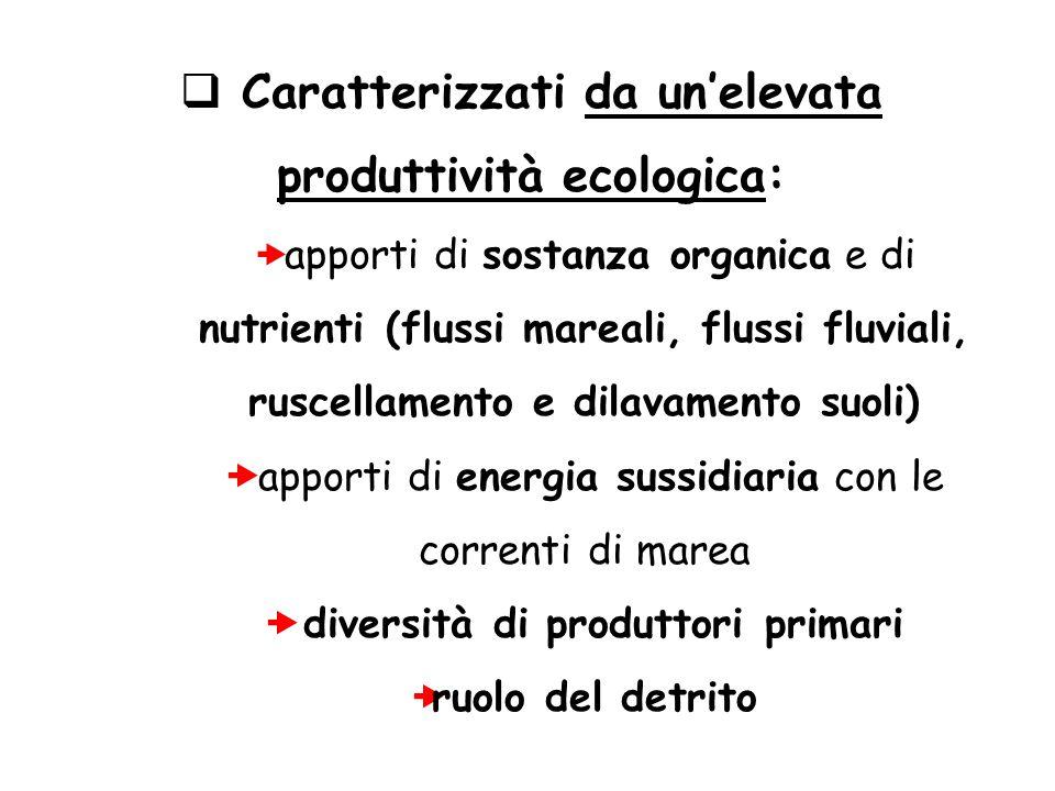  Caratterizzati da un'elevata produttività ecologica:  apporti di sostanza organica e di nutrienti (flussi mareali, flussi fluviali, ruscellamento e